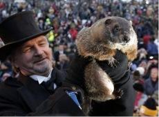 phil-marmota